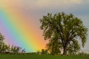 Wall Mural - Colorful Optic Rainbow Sky