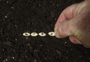 Sowing The Seed Of Life