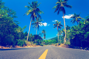 Nice asfalt road with palm trees  Wall mural