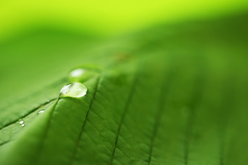 Close up of green leaf with drops