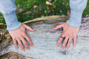 Hands of young woman on tree