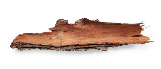Bark tree Fototapete