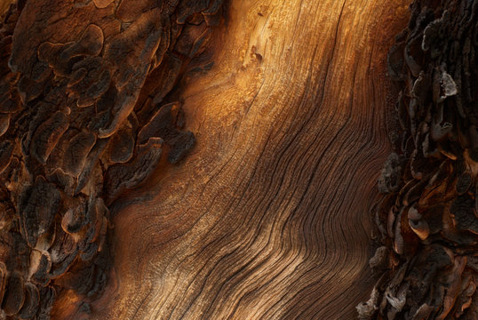 Traces of fire on an old wood (close up foto)