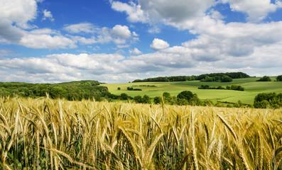 Saarland Natur Landschaft bei Eiweiler, Feld im Sommer