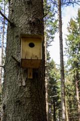 Ein Nistkasten im Wald