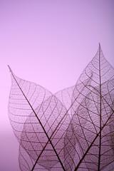 Foto op Textielframe Decoratief nervenblad Skeleton leaves on purple background, close up