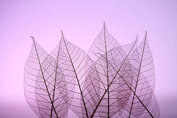 Garden Poster Decorative skeleton leaves Skeleton leaves on purple background, close up