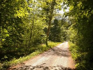 Waldweg in einem Sommerwald
