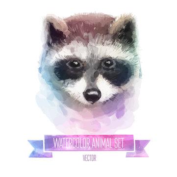 Vector set of watercolor illustrations. Cute raccoon