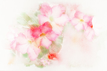 Flower (Desert Rose; Impala Lily; Mock Azalea) watercolor illust
