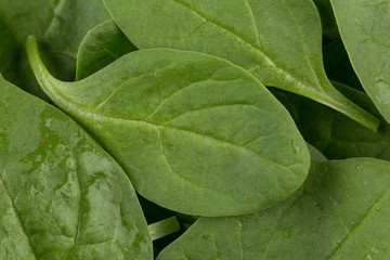 Green spinach as a background