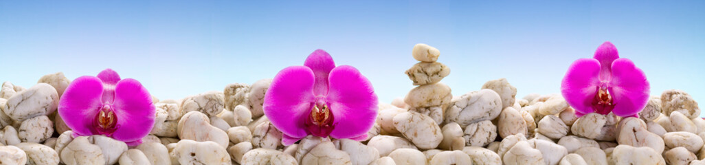 Panorama with purple orchids on the white stones.