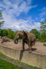 Elefant auf Mauer