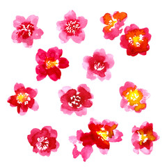 Collection of watercolor camellia flowers