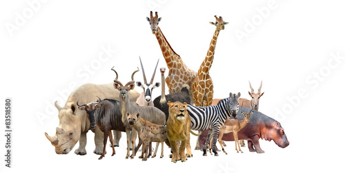 Wall mural group of africa animals