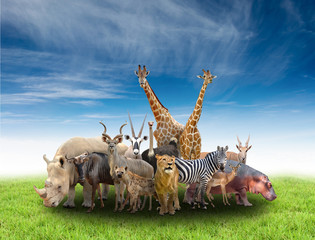 Wall Mural - group of africa animals
