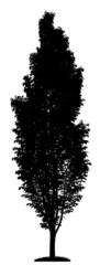 Fotografik eines schlanken Baumes als Scherenschnitt