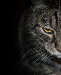 Motley cat