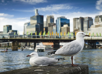 Close up of seagull perching on wooden post