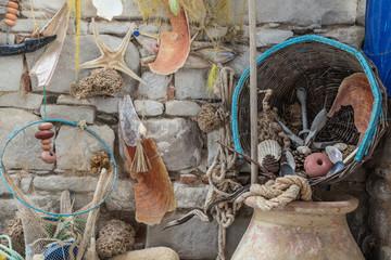 seashells on wall