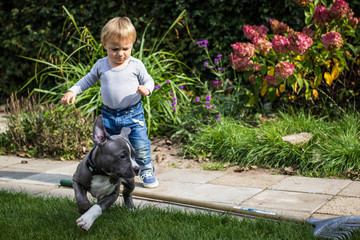 Boy (2-3) and puppy playing