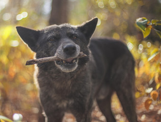 Dog holding stick in mouth