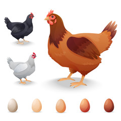 Realistic Hens in different breeds and eggs
