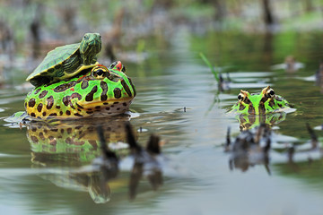 Close up of turtle sitting on toad
