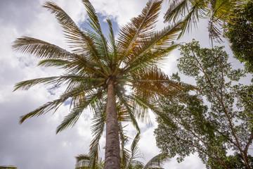 Palme und Sonne, Froschperspektive