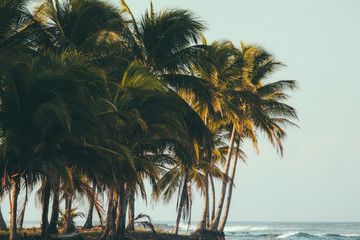 Costa Rica, Tropical beach with palm trees