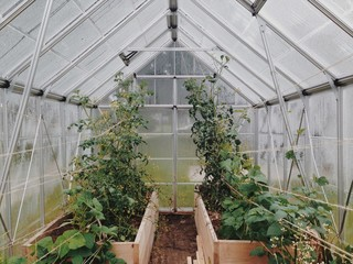 Greenhouse with plants in wooden boxes