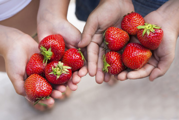 Two children holding strawberries in their hands