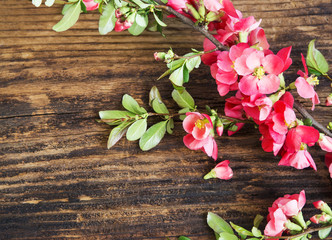 Spring Flowers Branch on Wooden Background