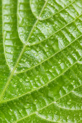 Beautiful green leaf with water drops close up