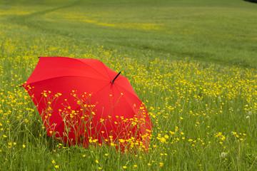 Red umbrella in a green field