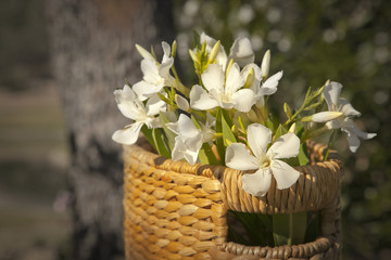 white flowers with basket, retro background,