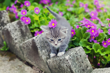 cute little kitten playing on the flower meadow