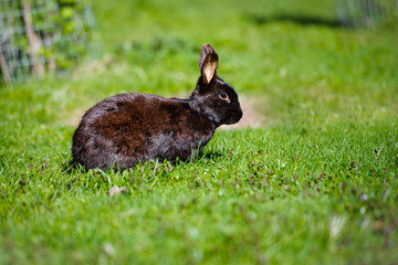 small black baby rabbit outdoors
