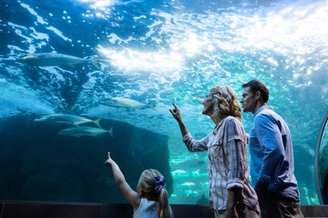 Family pointing a fish in a tank