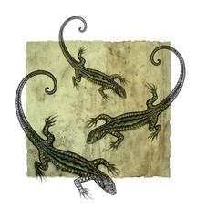 Hand drawing lizard dotwork