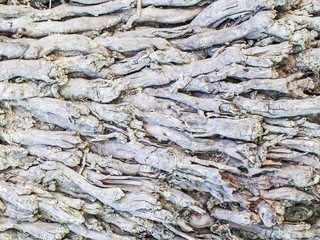 roots coconut tree, Abstract texture of natural background