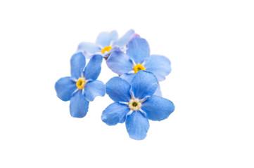 me-nots flowers