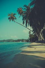 Retro toned palm tree on tropical beach