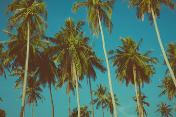 Coconut palm trees over the blue sky, vintage toned