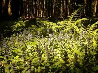Lichtung in einem Wald im Sonnenlicht