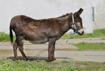Photo funny donkey