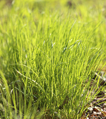 picture green grass