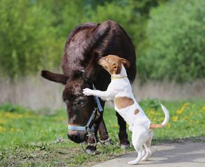 Photo funny donkey and dog