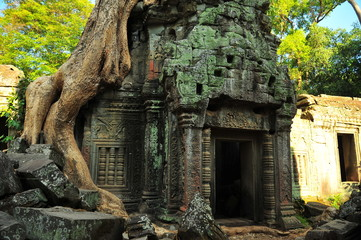 Acrylic Prints Historical buildings Angkor Ta Prohm Temple of Cambodia