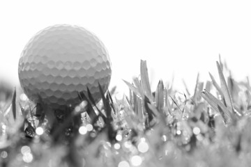 black and white of golf ball on grass with bokeh